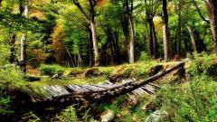 Beautiful Woods Wallpaper 20369