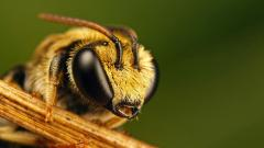 Bee Images HD 20998