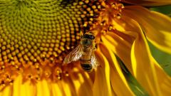 Bee Pictures 21001