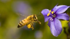 Bee Wallpaper 20983