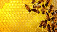 Bee Wallpaper 20989