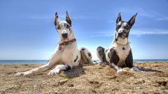 Big Dogs 9216
