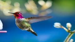 Bird Wallpapers 29518