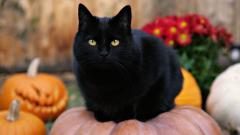 Black Cat Wallpaper 41994