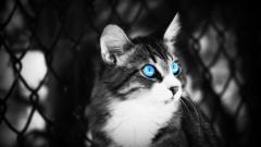 Blue Eyes 28568