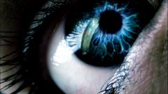 Blue Eyes Wallpaper 28559
