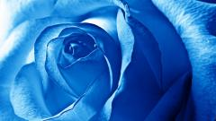 Blue Flowers 14085