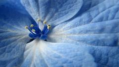 Blue Flowers 14088