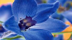 Blue Flowers 14093