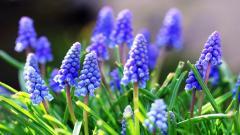 Blue Flowers 14097