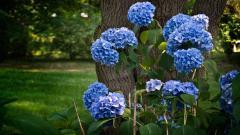 Blue Flowers 14100