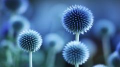 Blue Flowers 14101