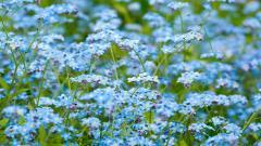 Blue Flowers 14104