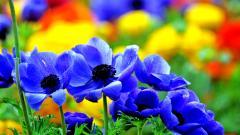 Blue Flowers 14113