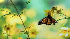 Butterfly Wallpaper HD 41047