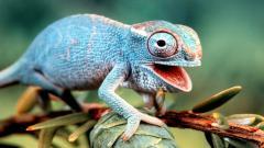 Colorful Lizard Wallpaper 21416
