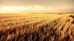Cool Field Wallpaper 31081