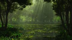 Cool Swamp Wallpaper 33788