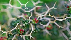 Cool Thorns Wallpaper 40183