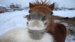 Cute Brown Horse Wallpaper 32536