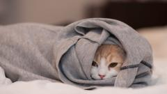 Cute Cat Clothes Wallpaper 43891