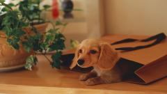 Cute Happy Dog Wallpaper 39354