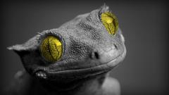 Cute Lizard Wallpaper 21414