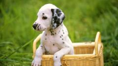 Cute Puppy Wallpaper 25748