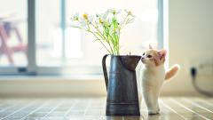 Cute Vase Wallpaper 39283