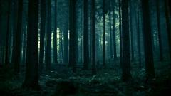Dark Forest 35744