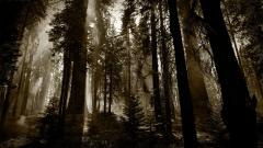 Dark Woods Wallpaper 20376