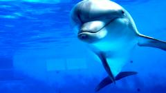 Dolphins Wallpaper 14683