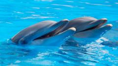 Dolphins Wallpaper 14685