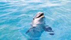 Dolphins Wallpaper 14688