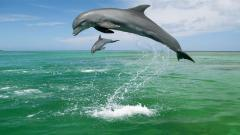 Dolphins Wallpaper 14689