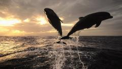 Dolphins Wallpaper 14693