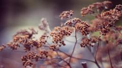 Dry Plants Background 39324