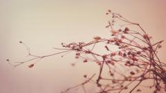 Dry Plants Wallpaper 39328