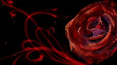 Elegant Rose Wallpaper 22052