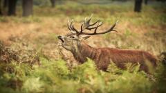 Elk Background 39374