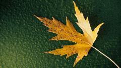 Fall Leaf Wallpaper 27342