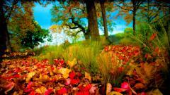 Fall Scenery 18759