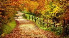 Fall Scenery 18760