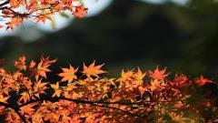 Fall Scenery 18766