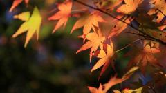 Fall Scenery 18769