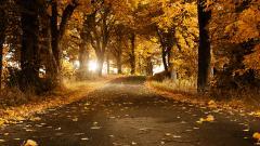 Fall Scenery 18770