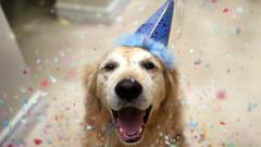 Fantastic Happy Dog Wallpaper 39368