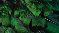 Feather Wallpaper 35471