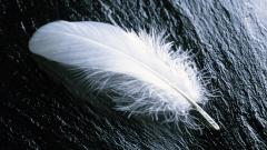 Feather Wallpapers 35470