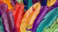 Feathers 35468